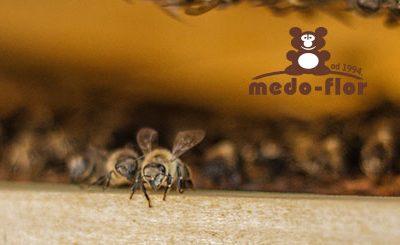 Znaju li pčele plesati?